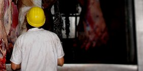 Arbeiter mit Schutzhelm vor Lagerraum mit geschlachteten Tieren