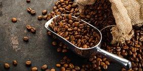 Handschippe voller Kaffeebohnen neben Jutesack voller gerösteter Kaffeebohnen